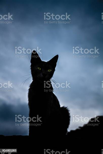 The black cat picture id504903383?b=1&k=6&m=504903383&s=612x612&h=nfnmoktyxis9nnq5uop0sxs4isdkpp4zv w3uhlddpk=