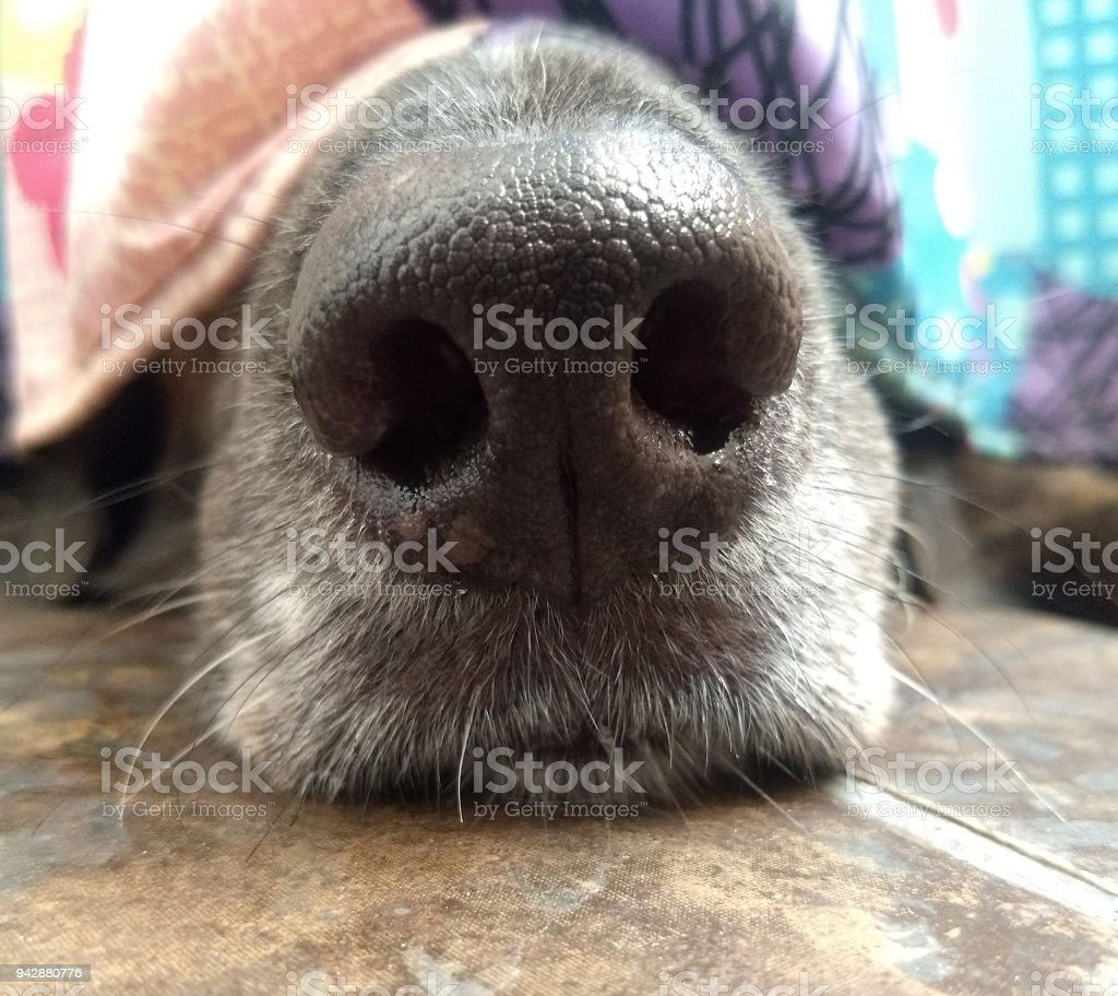 The black dog hiding in bathroom. stock photo