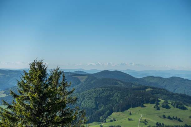 der schwarzwald in deutschland im hinblick auf die alpen - sommerferien baden württemberg stock-fotos und bilder