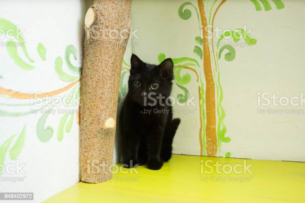 The black kitten sits on a shelf of green color picture id948402972?b=1&k=6&m=948402972&s=612x612&h=cfxlzyx chcxrg9pkdsn1esqwju yzyfbtnu my9smk=