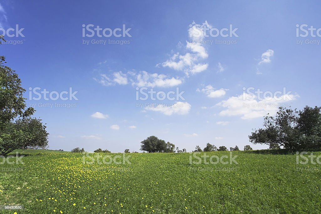 The blossoming hills of hot coast royalty-free stock photo