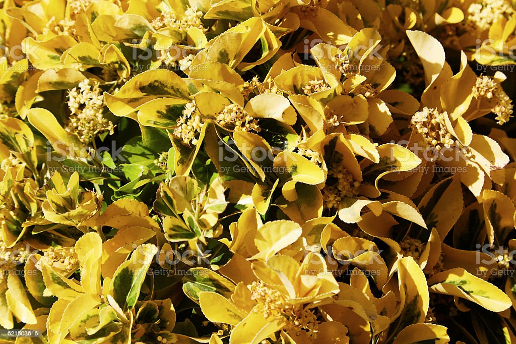 The blossoming plants with beautiful leaves foto stock royalty-free