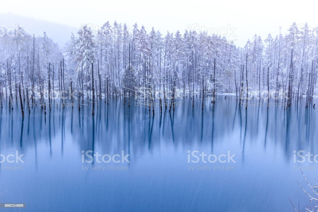 The blue pond in winter royalty-free stock photo