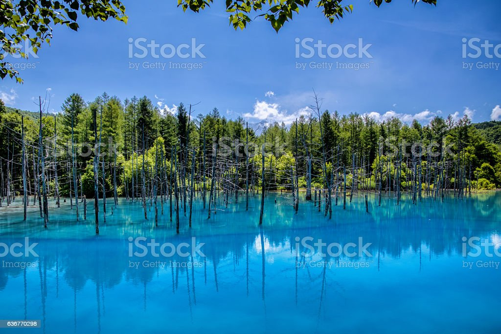 The blue pond stock photo