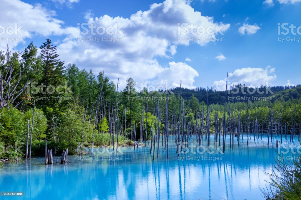 The blue Pond royalty-free stock photo