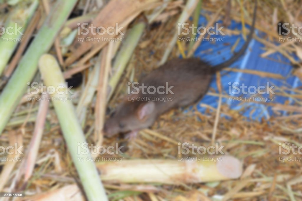 the blurry of rat and food in cement tube at farm,the new business in Thailand stock photo