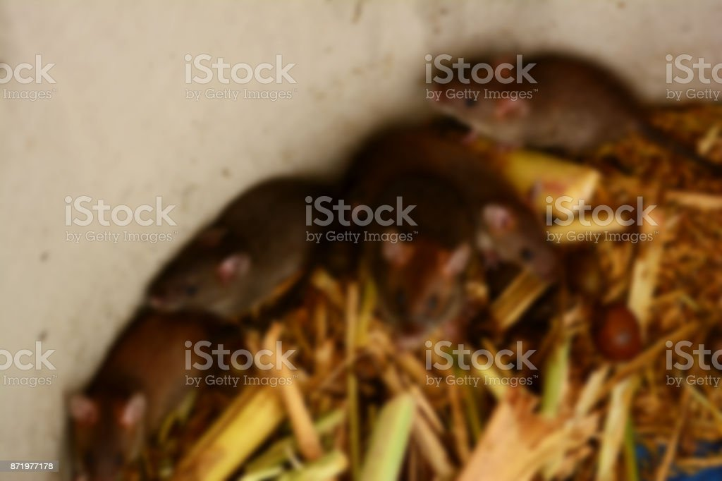the blurry of rats and food in cement tube at farm,the new business in Thailand stock photo