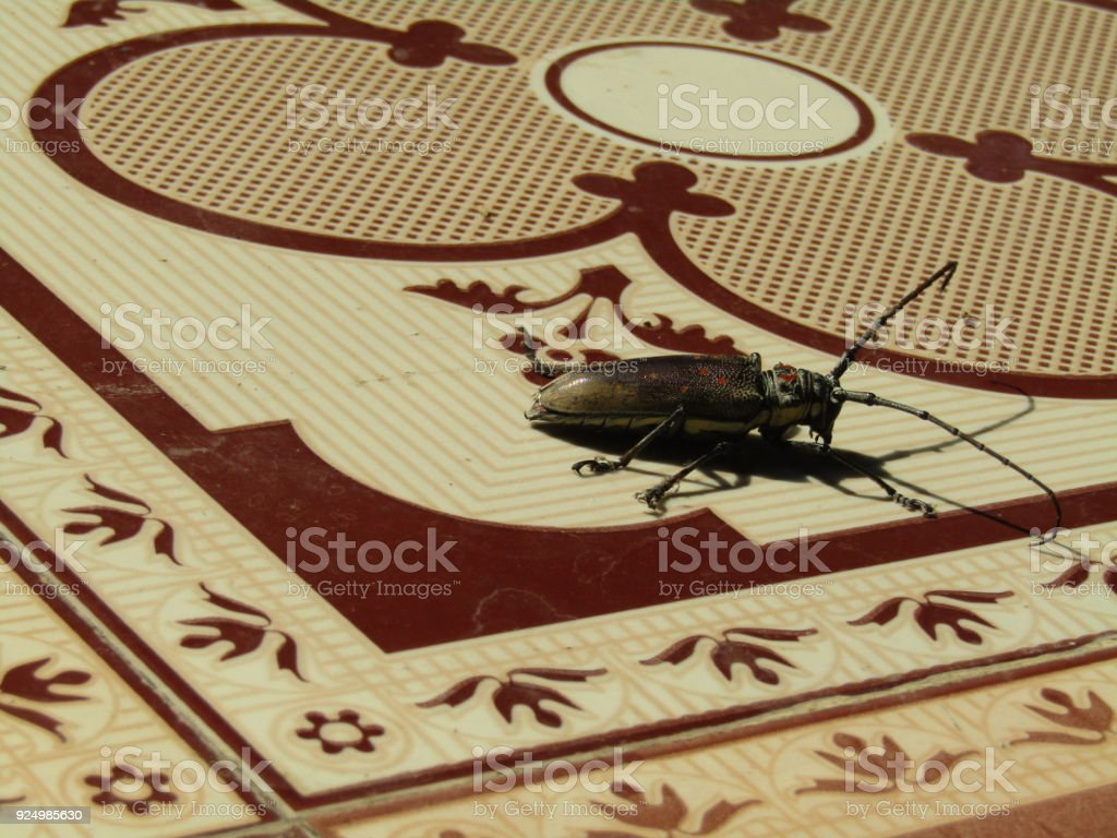 The body of an insect has three main parts stock photo