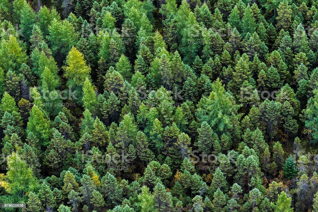 The boreal forest stock photo