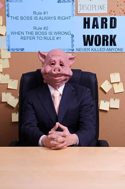 der boss - pig ugly stock-fotos und bilder