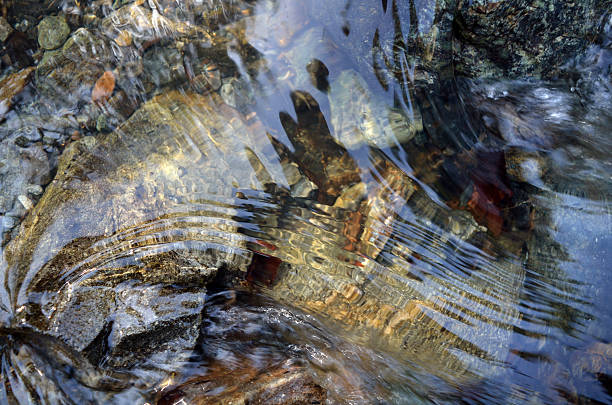 the bottom of a clear stream - flowing stock pictures, royalty-free photos & images