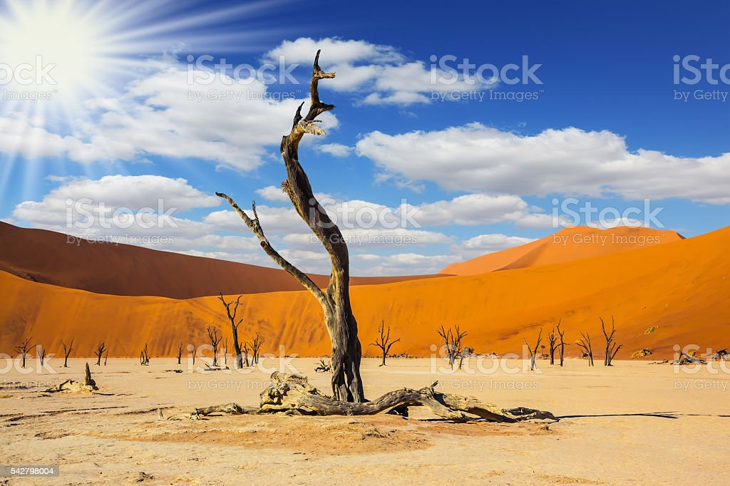 The bottom of dry lake with dry tree stock photo