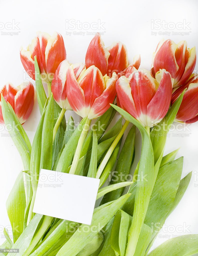 the bouquet of tulip royalty-free stock photo