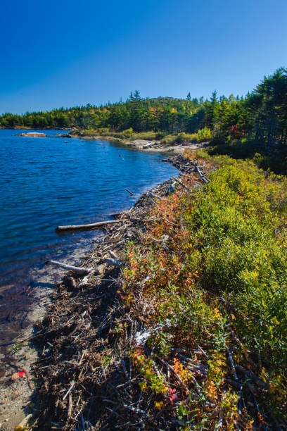 The Bowl Trail, Acadia National Park stock photo
