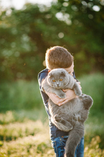 The boy holding hugging in hands and playing with a gray cat in picture id1134882388?b=1&k=6&m=1134882388&s=612x612&w=0&h=0xh8nycd zcabw8n9zitmunnhi dmclvpanedc3y0nk=