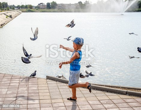 istock The boy runs along the lake promenade and chases pigeons 955186026