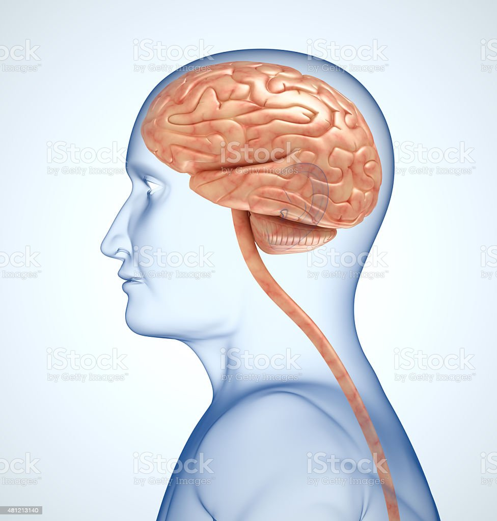 The brain in the transparent head on the light-blue background stock photo