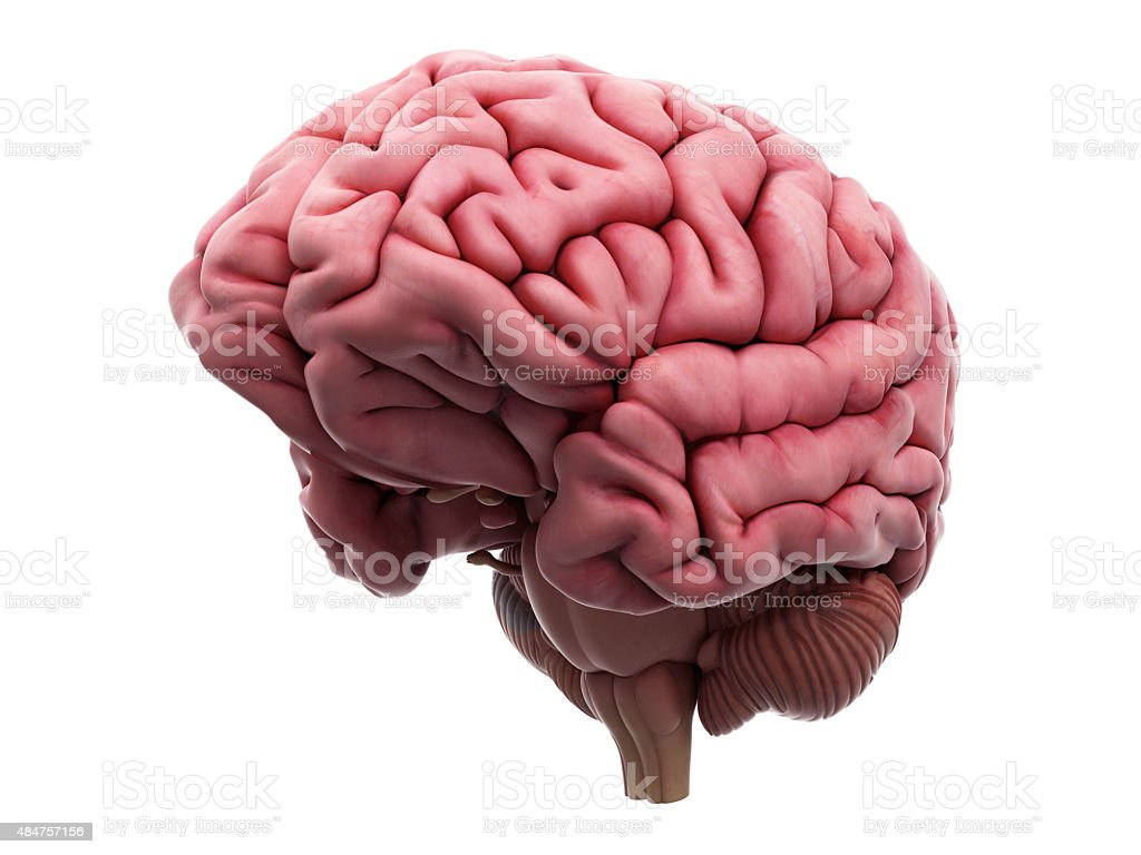 The brain stock photo