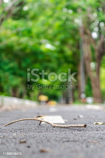 The branches fall in the middle of the asphalt road.