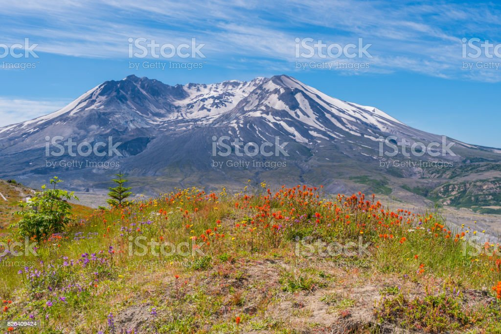 The breathtaking views of the volcano and amazing valley of flowers. Harry's Ridge Trail. stock photo