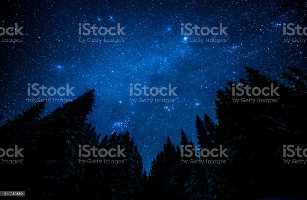 The bright starry sky in the night forest stock photo