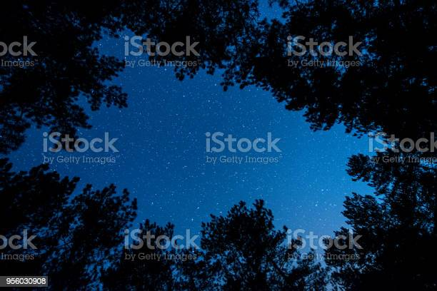Photo of The bright starry sky in the night forest