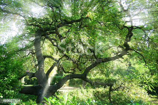 470927602 istock photo The bright sun rays shining through branches of trees, 469632314