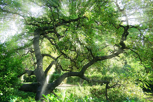o brilhante sol brilhando através dos galhos das árvores - jardim do eden - fotografias e filmes do acervo