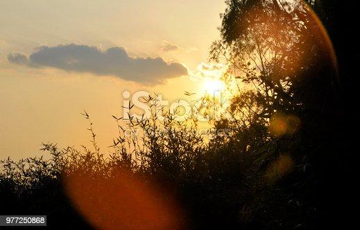 istock The Brightness 977250868