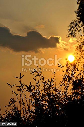 istock The Brightness 977250872