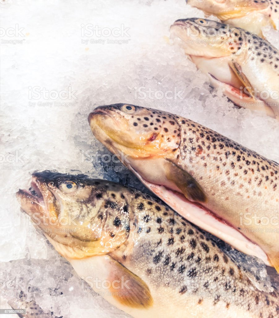 the brook trout stock photo