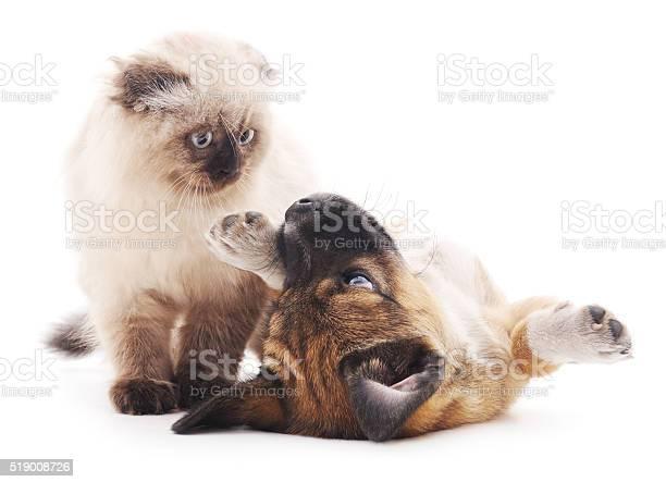 The brown cat and puppy picture id519008726?b=1&k=6&m=519008726&s=612x612&h=elvcdr1ysggb5a gntpgm743zlnhrkpl gxs1hsjjc8=