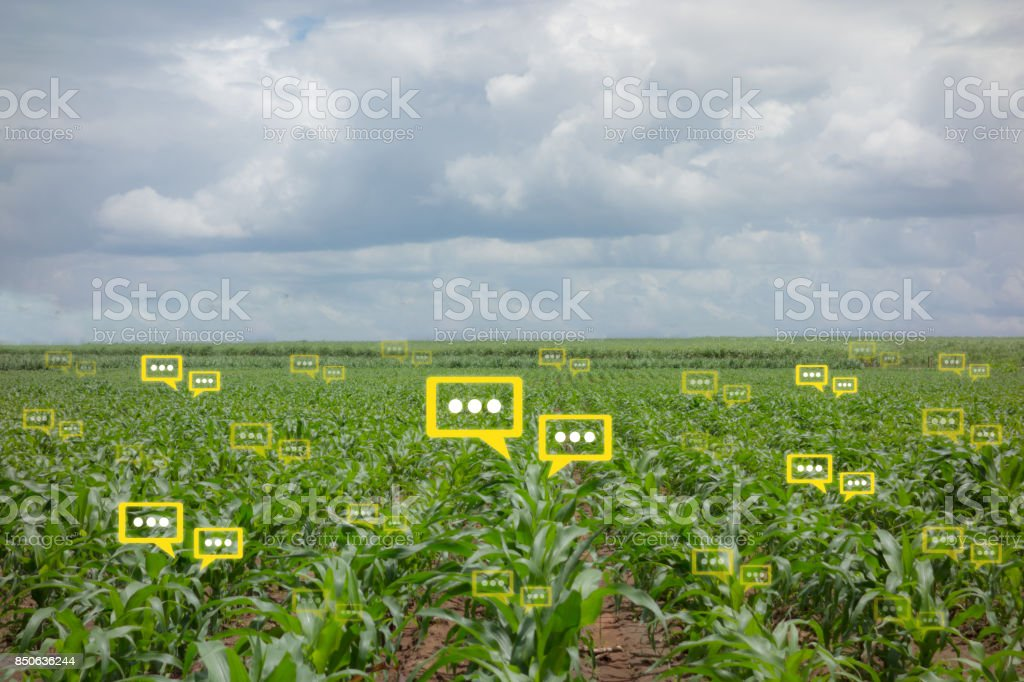 the bubble chat data the detect by futuristic technology in smart agriculture with artificial intelligence to improving yield, efficiency, and profitability in the farm stock photo