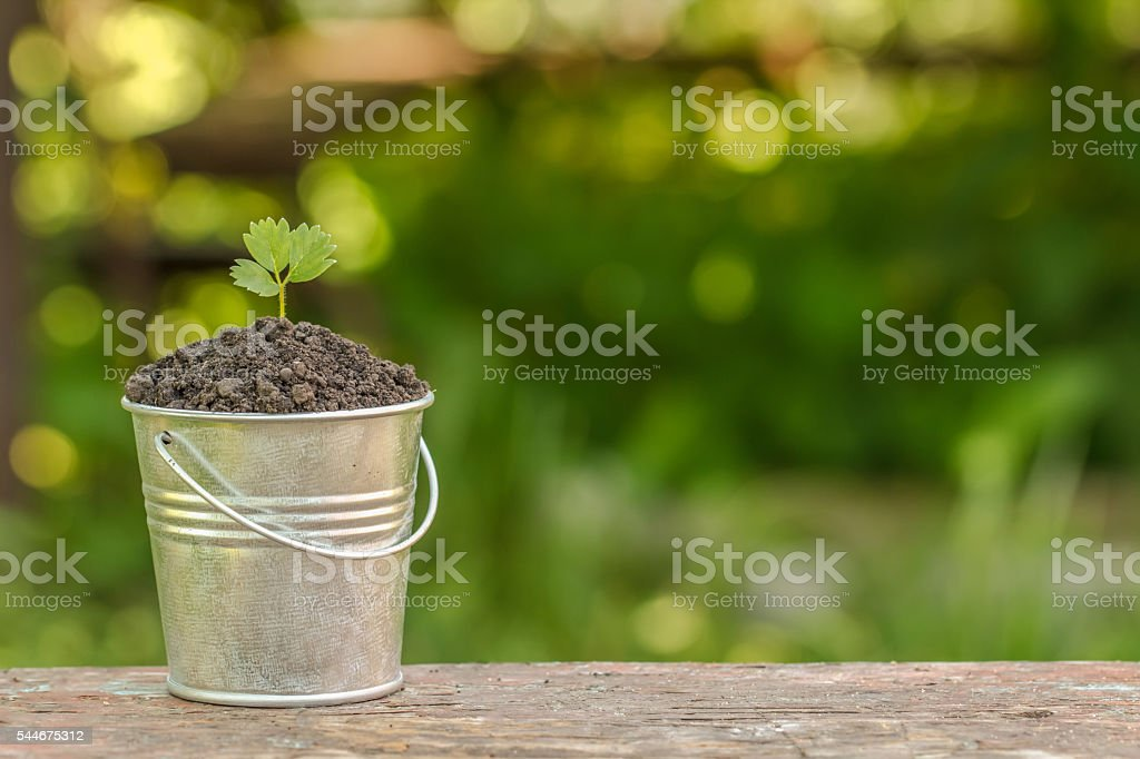 the bucket to the ground and plant on the board стоковое фото