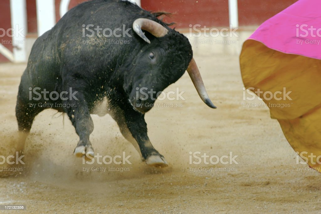 el toro stock photo