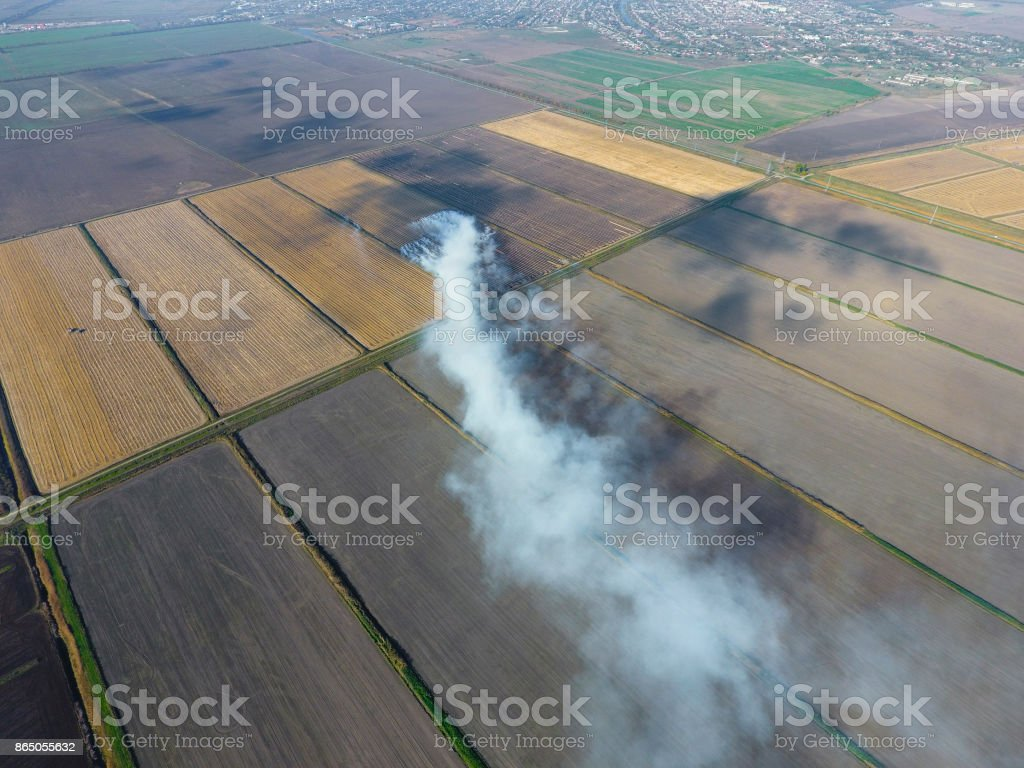 The burning of rice straw in the fields. Smoke from the burning of rice straw in checks. Fire on the field stock photo