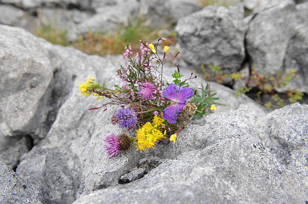 the burren - the burren stock pictures, royalty-free photos & images
