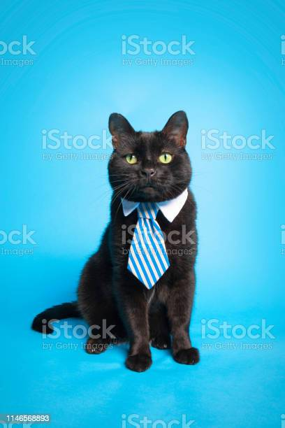 The business of being a cat picture id1146568893?b=1&k=6&m=1146568893&s=612x612&h=e5pt szmrytcmbzx1dnthlhhx2yu i3848eczzs5 ag=