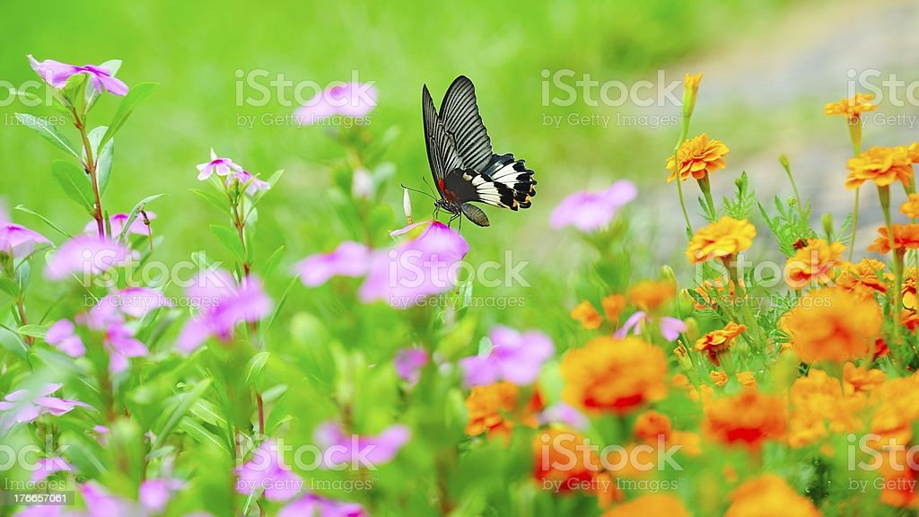 The butterfly alighted on a flower 05 royalty-free stock photo