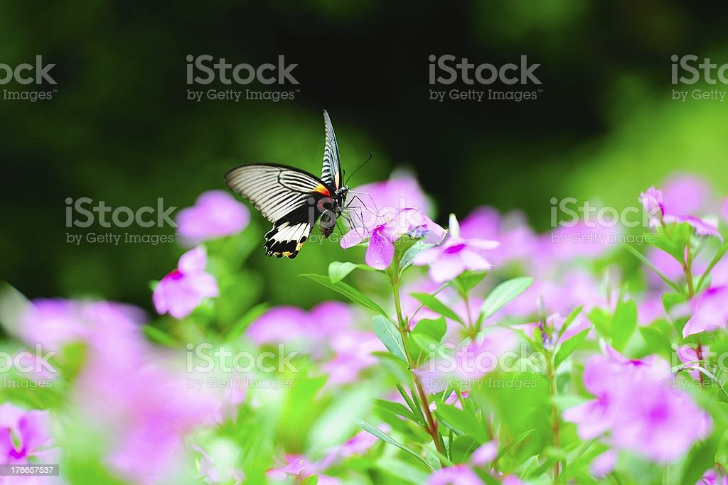 The butterfly alighted on a flower 09 royalty-free stock photo