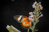 Colorful butterfly fly over the beautiful flower in the garden