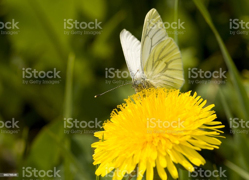 The butterfly. royalty-free stock photo