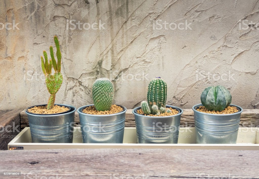 The cactus in a stainless steel cans is placed in a wooden picket,The cactus used to decorate the building to make it look beautiful. stock photo