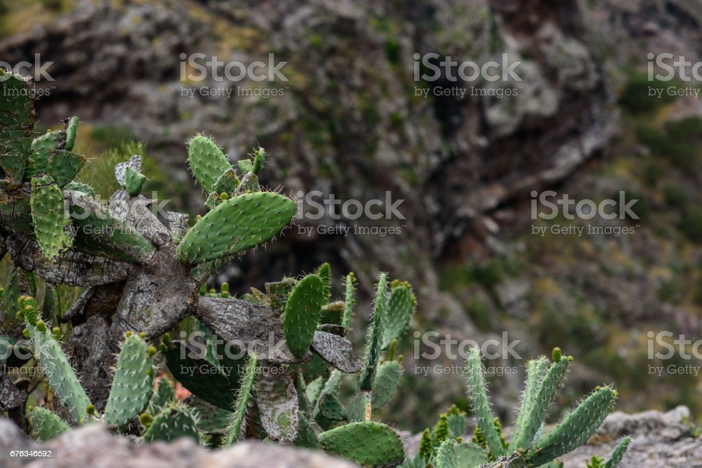 The cactus stock photo