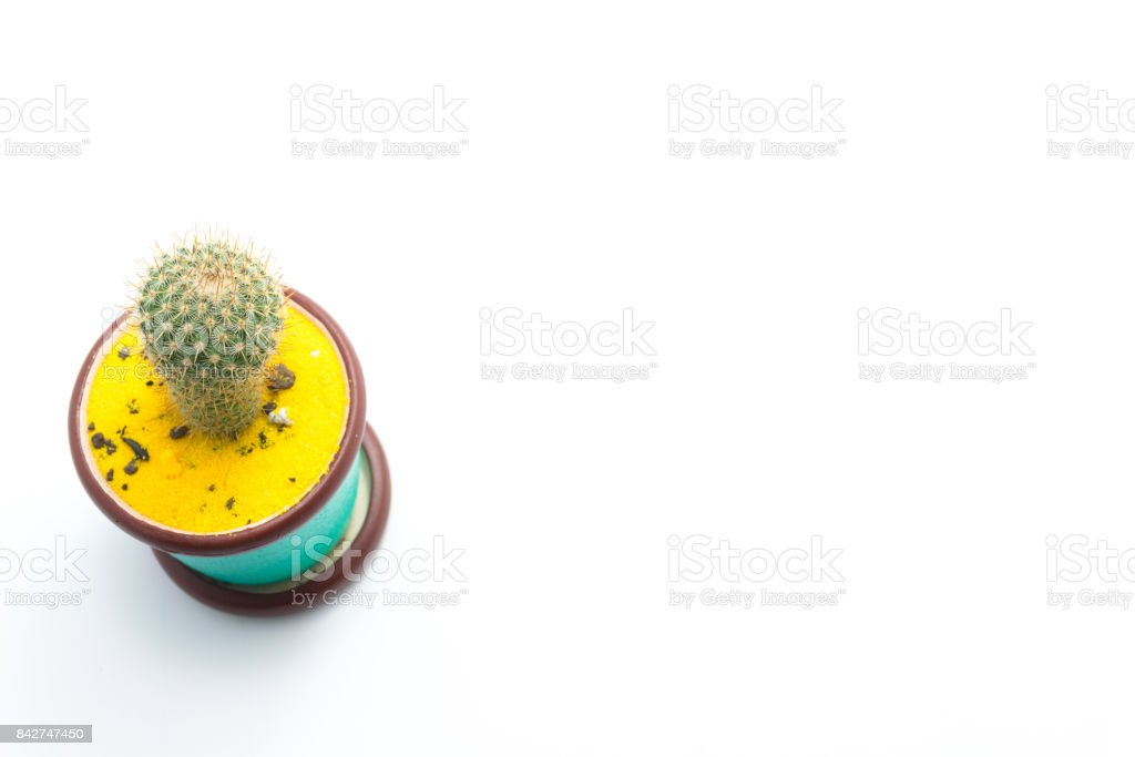 The cactus white background. stock photo