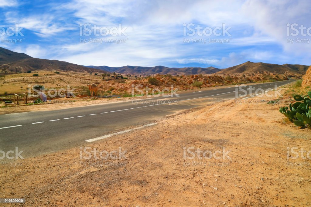 The camel on the dessert road. stock photo