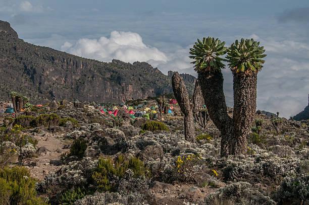 O acampamento, Barranco, Kilimanjaro - foto de acervo