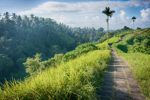 The Campuhan ridge walk in Ubud stock photo