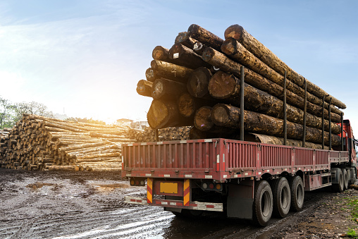 The car carries wood in a wood processing plant