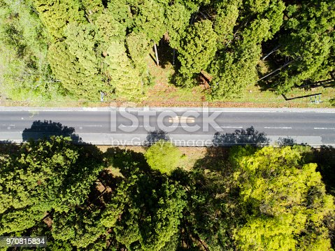 820775768 istock photo The car runs on the way in huge forest 970815834
